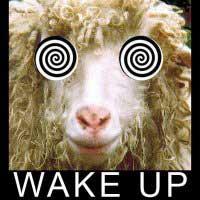 wake-up-p-803.jpg