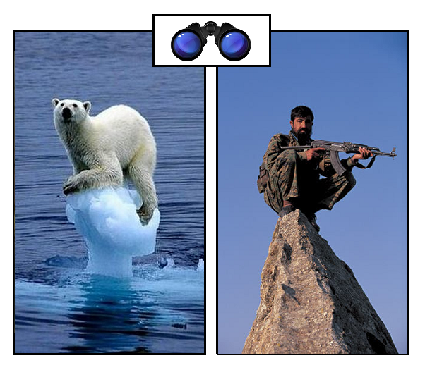 SPEC bear on iceberg