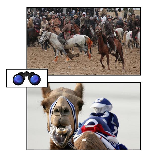 SPEC DQ buzkashi robot camel jockey