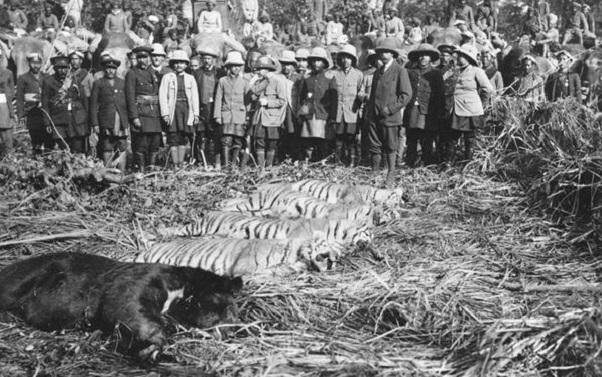 Nepal George V hunt