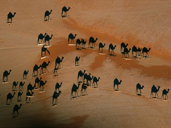 george-steinmetz-camels_shadows
