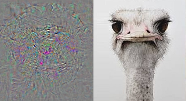 ghost ostrich
