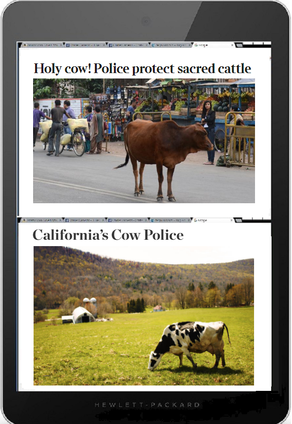 Tablet DQ 600 cow police
