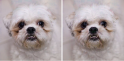 adversarial example dog ostrich 601